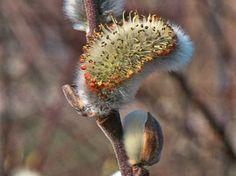 Les plantes du printemps