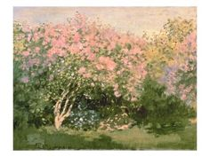 I don't think I've ever seen this Monet before. Lilac in the Sun Claude Monet This is the first time I have seen this painting. I love Monet. Claude Monet, Monet Paintings, Landscape Paintings, Flower Paintings, Indian Paintings, Abstract Paintings, Artist Monet, Pierre Auguste Renoir, Impressionist Paintings