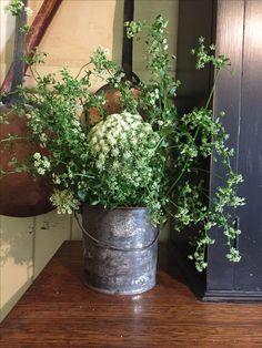 Herb Farm, Planter Pots, Herbs, Herb, Medicinal Plants