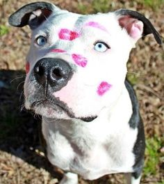 Happy Valentine's Day. Go ahead and give your dog a kiss or two, or a hundred!