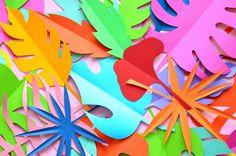 Tropical Colorsplash