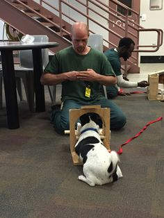 Teach Your Dog Fun Tricks, It's Not All Sit And Stay. *** Check out the image by visiting the link. #TrainDog