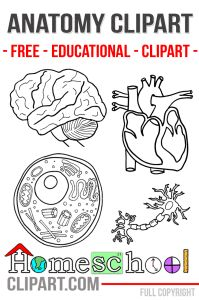Free Anatomy Clipart, Worksheets, Notebooking Pages and more
