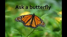 Awe-inspiring video of the day July 23 - Ask a butterfly