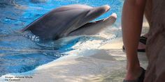 TAKE ACTION! petition: Dolphins Don't Belong in the Desert: Ban Dolphin Captivity in Las Vegas