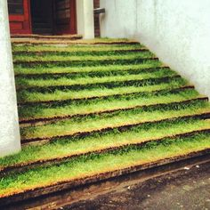 Šafárikovo námenstie (by Landscape Architecture, Landscape Design, Seed Bombs, Green Paint Colors, Green Carpet, Bratislava, Eurotrip, Go Green, Marcel