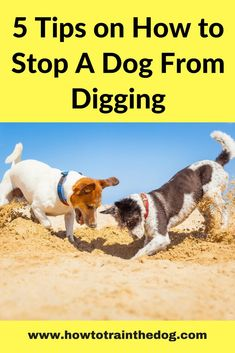 How to Stop A Dog From Digging (5 Simple Tips)