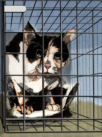 Differences between Feral and Stray Cats - An Important Difference - Alley Cat Allies