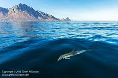 Common Dolphin, Happy Earth, Earth Day, Dolphins, Landscape Photography, Whale, Safari, Backdrops, Cruise