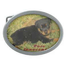 #pure innocence rottweiler puppy oval belt buckle - #rottweiler #puppy #rottweilers #dog #dogs #pet #pets #cute