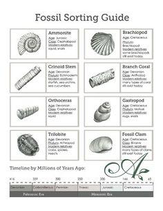 fossils worksheets for 4th grade fossils student handout teresa 39 s board fossils science. Black Bedroom Furniture Sets. Home Design Ideas