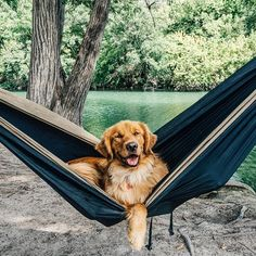 Saturday's were made for this!  Photo: @hunter_lawrence #GoldenRetriever