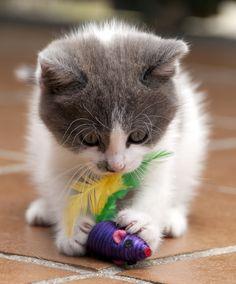 I need kitties.....lots of them.