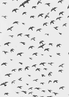 A flock of birds pattern the sky.