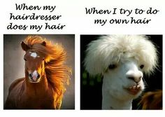 23 Hilarious Memes That Will Make You Glad You Are Not A Hairstylist - Inner Strength Zone Hairstylist Memes, Hairdresser Quotes, Hairstylist Problems, Hair Meme, Hair Humor, You Are Beautiful Quotes, Curly Hair Problems, Hair Issues, Funny Animal Quotes