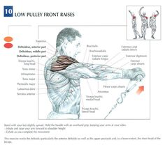 BodyBuilding Cable Flyes For Chest Muscle Anatomy. # ...