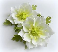 Анемон из фоамирана: мастер-класс по выкройке, по шаблону МК, цветы и фото, видео