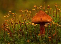 Amazing fungi