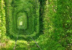 Famosos túneis de árvores Túnel do Amor - Ucrânia - Um dos túneis de árvores mais belos do mundo, encontrado perto da cidade de Klevan na Ucrânia. Este é, de facto, um túnel de trem de árvores. É a principal atração na área e também um dos dos lugares mais bonitos da Ucrânia.