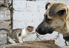 what are you!...... doggie says are you a runt dog... no, you smell different... what are you