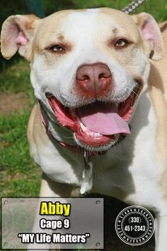 Meet 09 Abby, an adoptable Pit Bull Terrier looking for a forever home. If you're looking for a new pet to adopt or want information on how to get involved with adoptable pets, Petfinder.com is a great resource.