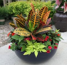 Thrilling About Container Gardening Ideas. Amazing All About Container Gardening Ideas. Container Gardening, Gardening Tips, Organic Gardening, Gardening Vegetables, Container Flowers, Full Sun Container Plants, Outdoor Plants, Potted Plants, Potted Plant Centerpieces