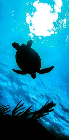 Explore vivid coral reefs and amazing sea creatures including turtles, stingrays and more in St. Maarten. Snorkel, Scuba and Sea Trek excursions are available for all skill levels.