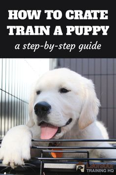 How To Crate Train A Puppy - A Step By Step Guide - White Golden Retriever puppy lying down in his crate with the door open. Puppy Schedule, Puppy Training Schedule, Training Your Puppy, Dog Training Tips, Dog Crate Training, Labrador Puppy Training, Labrador Dogs, Black Labrador, White Golden Retriever Puppy