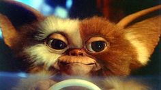 Gremlins is a horror film in which a boy inadvertently sets a small army of monsters loose on a town. Most of all, it features Gizmo, who is so cute. He was the Furby before Furby existed. Love that Gizmo. Les Gremlins, Gremlins Gizmo, Pekinese, Back In My Day, 80s Kids, Ol Days, My Childhood Memories, Cultura Pop, The Good Old Days