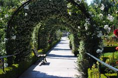 Tunnel of Jasmine.  Gardens of the World