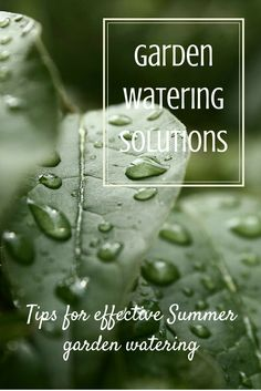In the Summer months when plants are growing so fast, the demand for water is at it's peak. Here are some tips for effective garden watering.