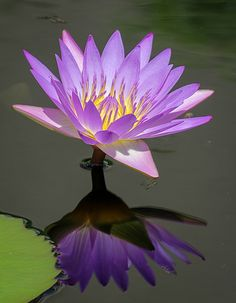 Water Lily at Longwood | Flickr - Photo Sharing!