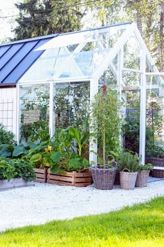 greenhouse & shed Greenhouse Shed, Greenhouse Gardening, Shed Design, Garden Design, Wooden Greenhouses, Potting Sheds, Begonia, Green Plants, Dream Garden