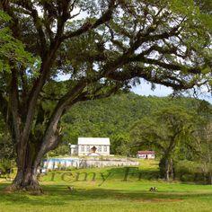 Simons Church - Comfort Hill by photographer Jeremy Francis Contemporary Artists, Fine Art Paper, Jamaica, Caption, Plants, Negril Jamaica, Plant, Planting, Planets