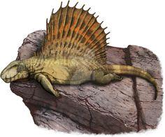 Dimetrodon grandis by https://kana-hebi.deviantart.com on @DeviantArt