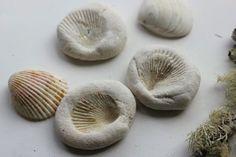 Fossili con conchiglie e pasta di sale