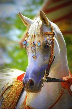 Arabian horse love the tack! Lavender nose and markings. All The Pretty Horses, Beautiful Horses, Animals Beautiful, Simply Beautiful, Horse Pictures, Animal Pictures, Pictures Images, Animals And Pets, Cute Animals