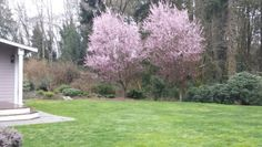 This private backyard is just a 10 minute walk from the #bainbridgeisland ferry.