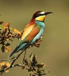 bird watching @ Quinta do Barranco da Estrada, Santa-Clara-a-Velha, Alentejo, Portugal