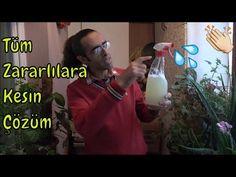 Çiçek Hastalık ve Zararlıları İle En Kolay Mücadele - YouTube Garden Plants, Youtube, Houseplants, Flower, Botany, Indoor House Plants, Youtubers, Flowers, Youtube Movies