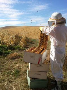 How is public relations like a swarm of bees?