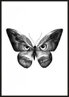 Owlifly by Sanna Wieslander #nordicdesigncollective #sannawieslander #owl #butterfly #illusion #animals #fly #frame #peculiar #different #unique #wings #black #white #grey