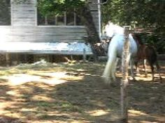 Luminosa with Foal, Galactica in Monteverde Costa Rica