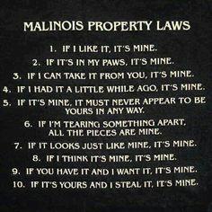 Malinois rules