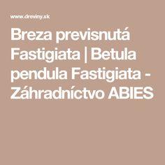 Breza previsnutá Fastigiata | Betula pendula Fastigiata - Záhradníctvo ABIES