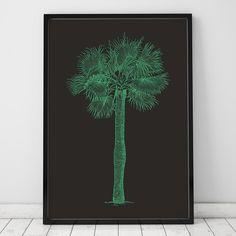 Poster ou Tela MDF - Palma de Sombrero - decohouse