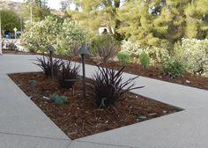 Succulents, Phormium, poolside planter