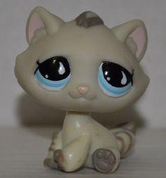 Kitten #563 (Tan, Blue Eyes, Stripes on Tail, White Raind... http://www.amazon.com/dp/B00HRYBWO0/ref=cm_sw_r_pi_dp_hG2ixb1TJGCKG