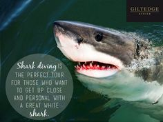 Cape Town | Shark Diving Shark Diving, Table Mountain, Great White Shark, Africa Travel, Madagascar, Cape Town, Morocco, South Africa, Tours