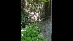 This amazing watershed supplies fresh water to 494 homes Lompico Creek, Santa Cruz, CA #AquaKlear #BetterThanSeptic